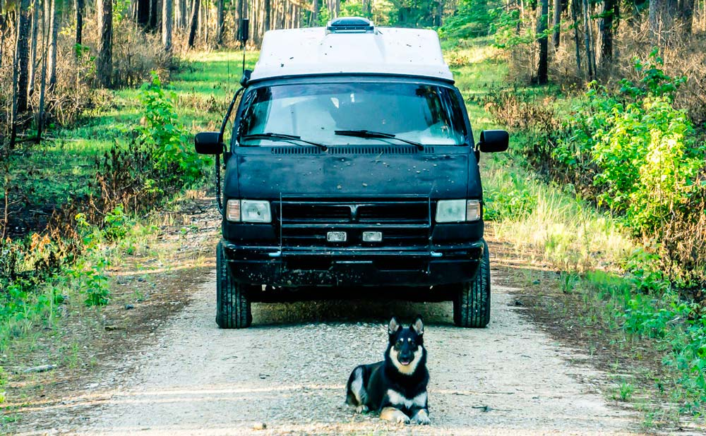 VanLife Dog