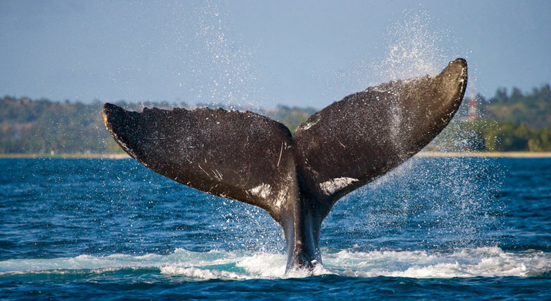 whale watching tour in acadia national park