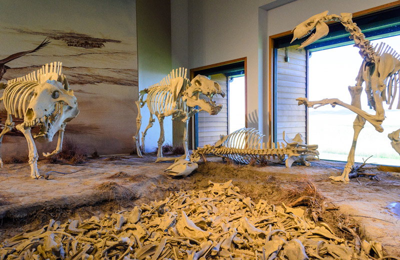 bones at the agate fossil beds national monument