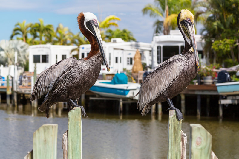 private campgrounds near the florida everglades national park