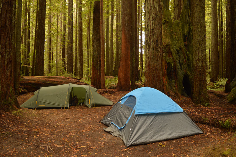 tent camping in sequoia national park california beneath the redwood trees
