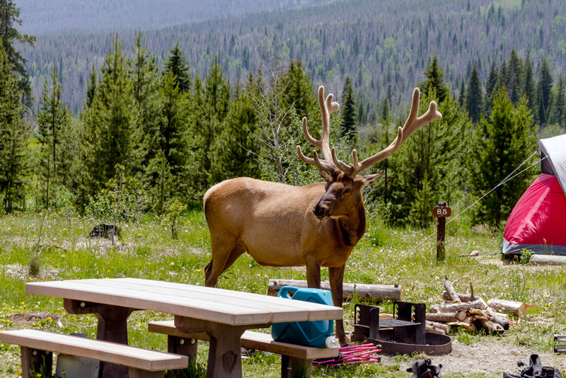 Wildlife At A Campsite In The Colorado National Forest