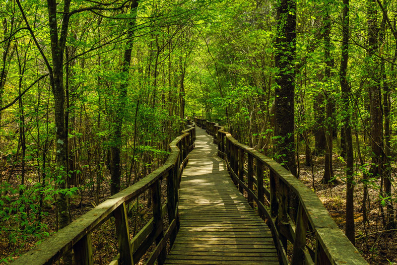 boardwalk hiking trail in congaree national park south carolina