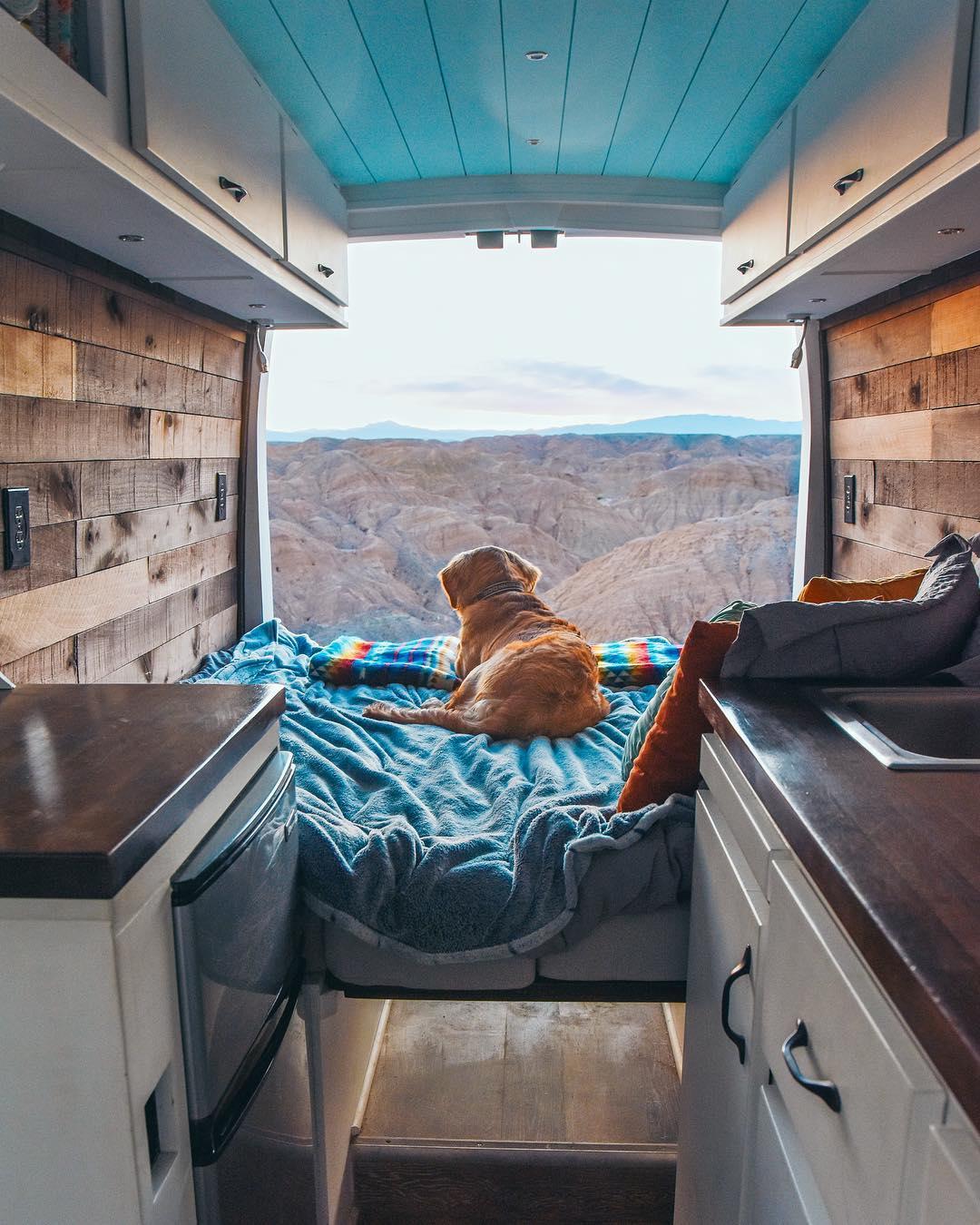 dog sitting in a diy camper van conversion