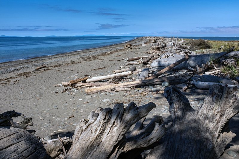 driftwood in the dungeness spit wildlife refuge