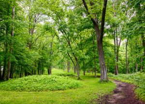 Effigy Mounds National Park In Iowa