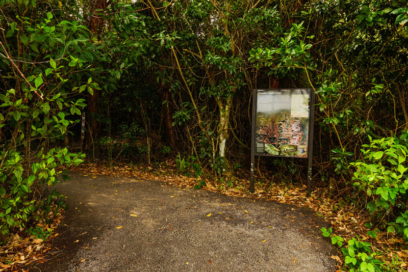 gumbo limbo trail in everglades national park florida