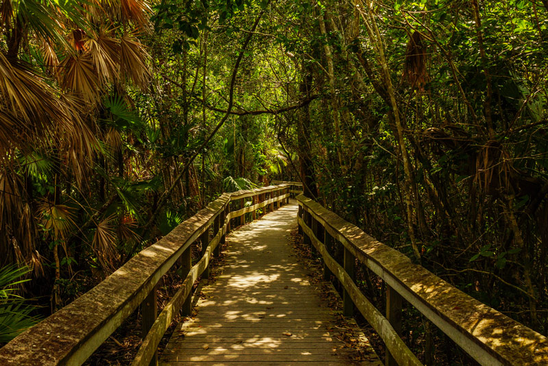 hiking through everglades national park in florida