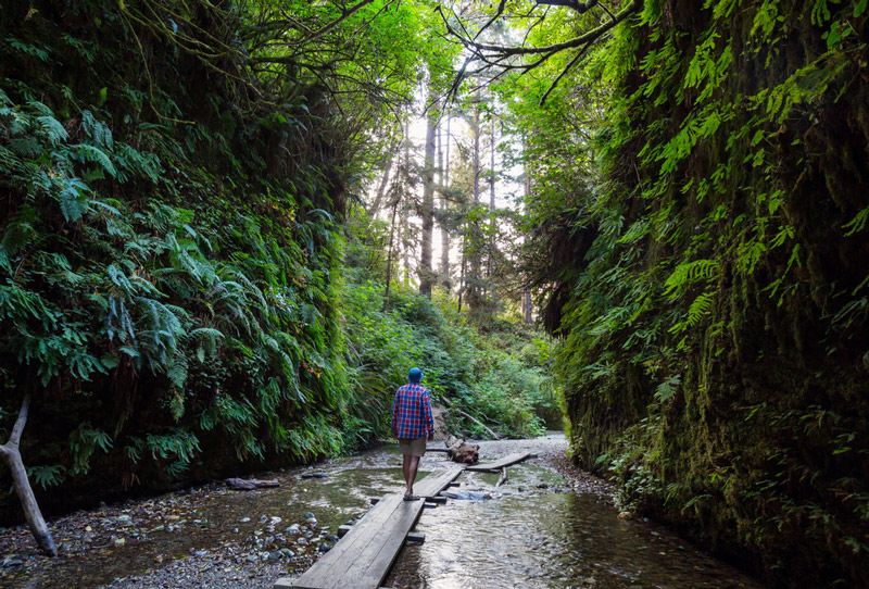 hiking on the fern canyon trail in redwood national park