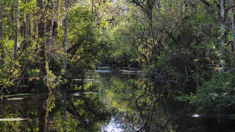 river and swamp in a florida national park