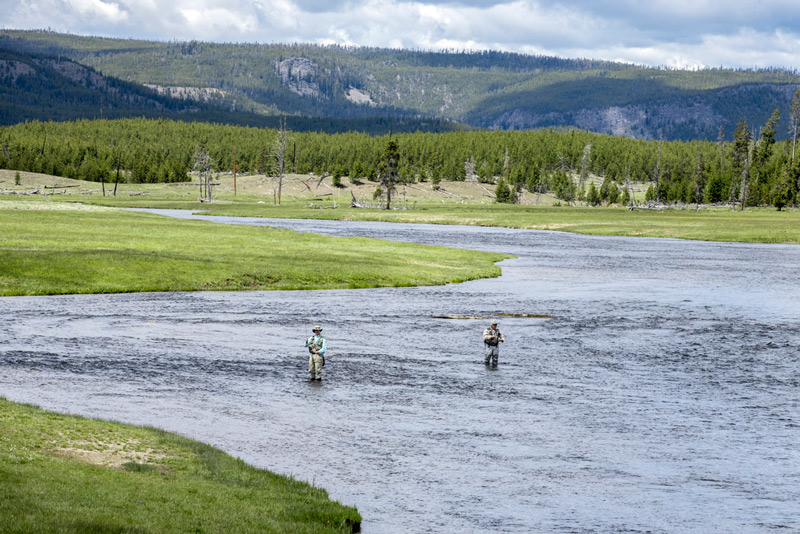 fly fishing in the Gibbon River in yellowstone national park