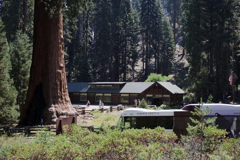 tourists visit the giant forest museum in sequoia national park california