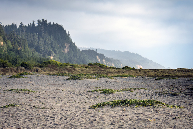 gold bluffs beach campsite in redwoods national park california