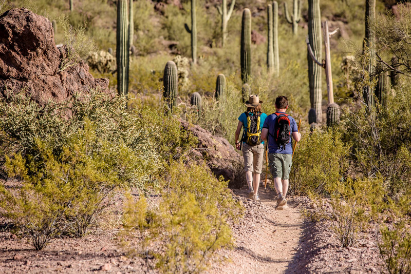 hiking among cacti in saguaro national park arizona