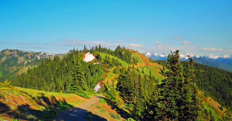 hurricane hill hiking trail in olympic national park washington