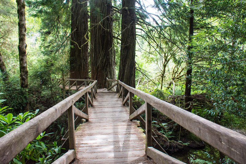 james irvine trail in redwoods national park california
