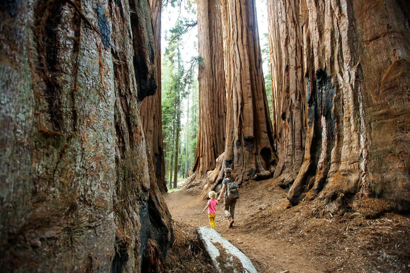 Camping and hiking in kings canyon and sequoia national park, california