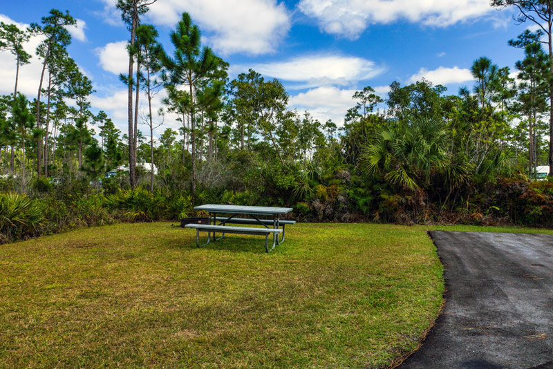 campsite at long pine key campground in everglades national park