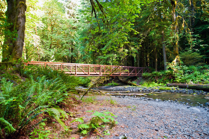 forest bridge on the hike to marymere falls in olympic national park