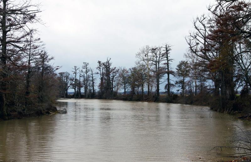 mississippi delta swamp