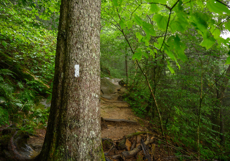north country national hiking trail in vermont park