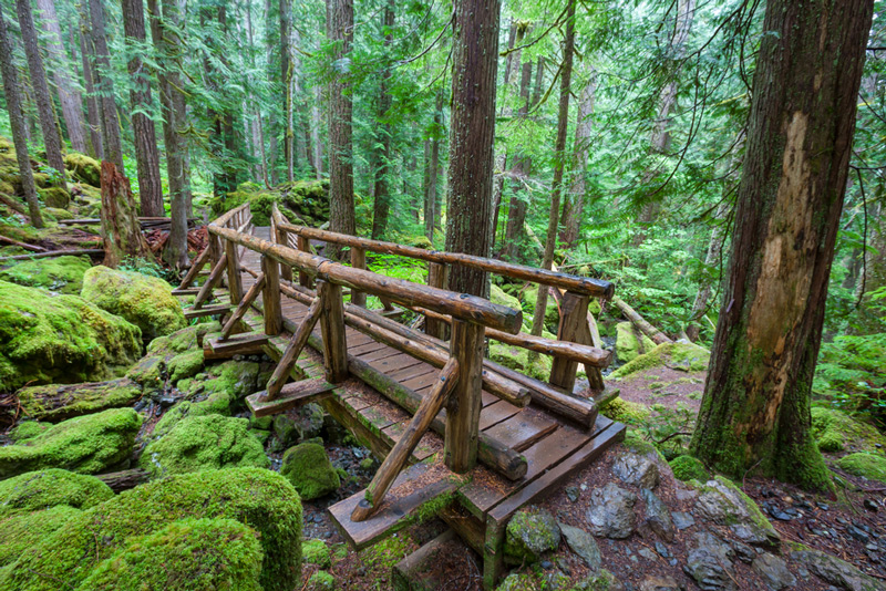hiking trail in olympic national park