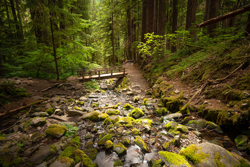 Trail To Sol Duc Falls In Olympic National Park Washington