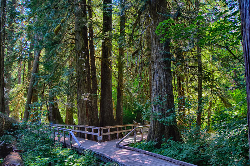 patriarchs trail mount rainier national park
