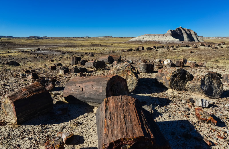 ancient wood in petrified forest national park arizona