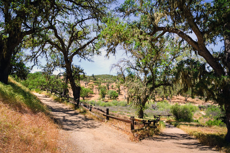 trail outside the campground at pinnacles national park in california