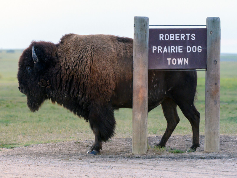 road sign for roberts prairie dog town in south dakota badlands