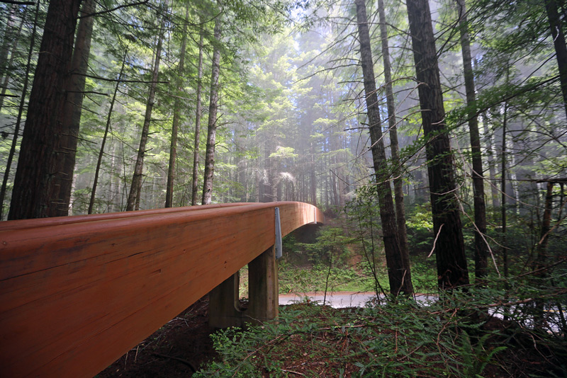 Bridge in Lady Bird Johnson Grove, Redwood National Park California