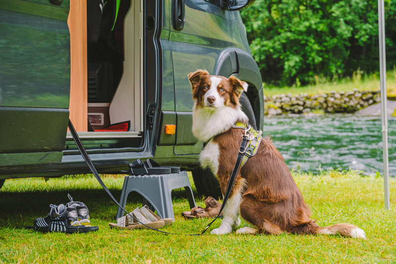 using a dog as an rv security system