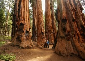 Camping In Sequoia And Kings Canyon National Park