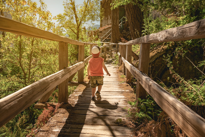 hiking on a boardwalk trail in north cascades national park