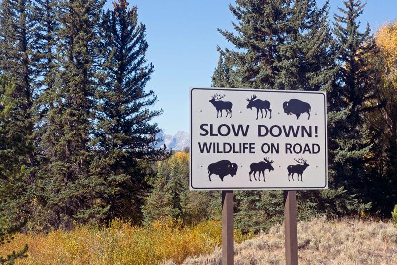 wildlife crossing road sign in grand teton national park wyoming