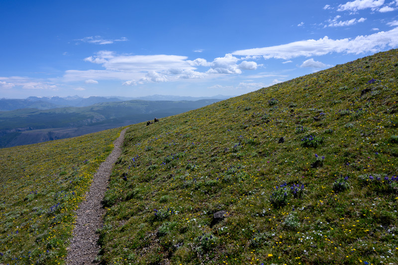 biking trail that weaves through the mountains in yellowstone national park