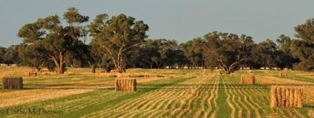 4 CMc Int Rural Winner_