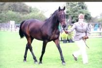 Retired national hunt horse