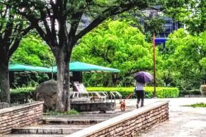 芦屋中央公園