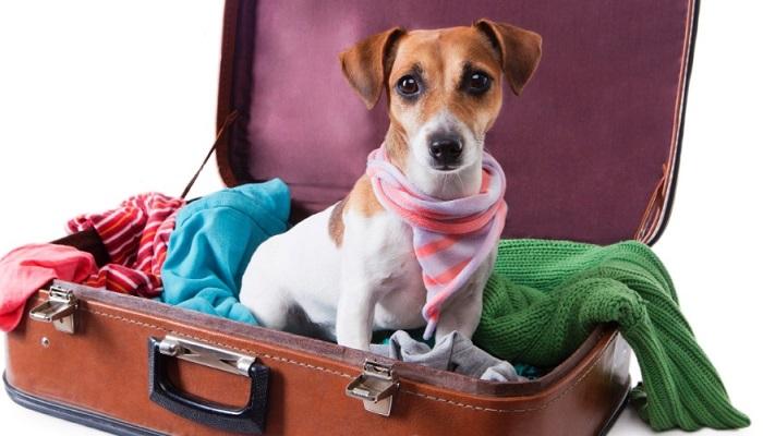 viajar-pra-cachorro