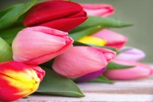 Tulipán símbolo del párkinson