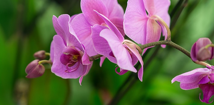 Sawgrass Nature Center Holds Third Annual Orchid & Plant Festival