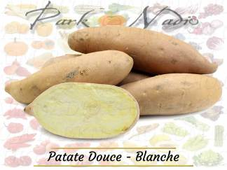 Patate douce blanche