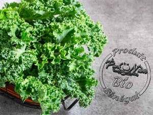 Livraison de kale bio à Dakar