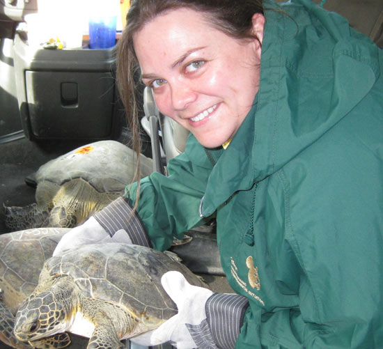 Endangered Sea Turtles Rescued