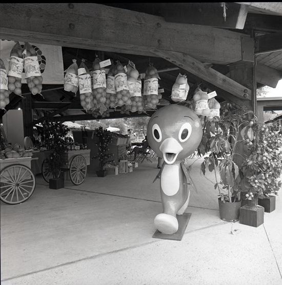 Orange Bird at Lake Buena Vista Shopping Village (Now Downtown Disney) in the 1970s