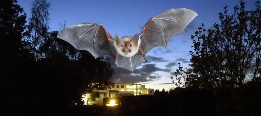 primeur voor maastricht vleermuisvriendelijke verlichting