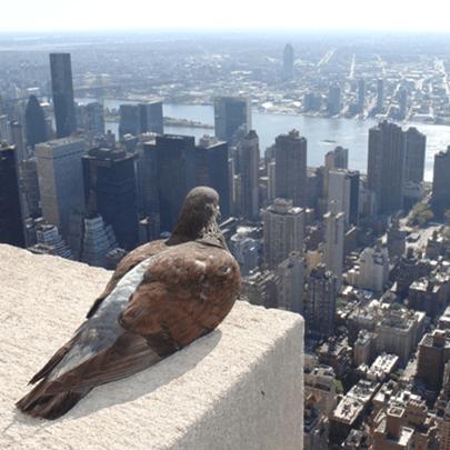 Image: http://canewspodcast.com/2013/11/30/podcast-canadian-pigeons-for-sale/