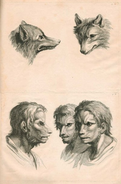 Tête physiognomonique inspirée par un loup, vers 1670. Musée du Louvre.